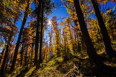 (c) Wolfgang Pfleger-8478 (wolfgangp_vienna) Tags: niederösterreich loweraustria austria österreich schneeberg schneebergland herbst autumn colorful bunt wald wiese blue blau blauerhimmel