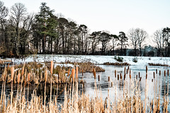 lily pond in winter (Harry McGregor) Tags: dumfrieshouse greatstewardofscotland cumnock ayrshire scotland nikon d3300 harrymcgregor 20 january 2018 wood sky pond water field forest tree grass winter snow