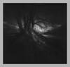 Dark printed bunch of trees (Mark Dries) Tags: markguitarphoto markdries pinhole piglet wheehamcam wheehamx ilford fp4 r09 rodinal 150 1500 agfa brovira 112 grade2 darkroomprint dark