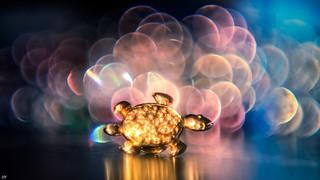 Turtle Jewel