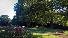 Roses and sunshine... (@petra) Tags: park scenery richmondpark london uk lights shadows nature flowers trees people bench nikon