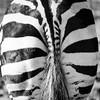 Zoo Blankendaal (Herman1705) Tags: zoo dierentuin dierenpark blankendaal tuitjenhorn warmenhuizen harenkarspel schagen noordholland