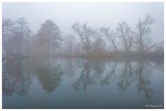 Reflets frileux (Pascale_seg) Tags: landscape paysage earth terre riverscape étang brume brouillard mist misty reflet reflection sky blue bleu froid cold river moselle lorraine france nikon hiver winter