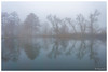 Reflets frileux (Pascale_seg) Tags: landscape paysage earth terre riverscape étang brume brouillard mist misty reflet reflection sky blue bleu froid cold river moselle lorraine france nikon hiver winter