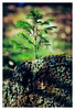 A New Beginning (Eckehard Straßweg) Tags: fujifilmxt2 fujinonlens nature outdoor natur woodlandphotography tree baum tanne wald forest fir wood holz green neuanfang naturephotography bokeh