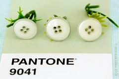 PANTONE 9041 (Anne-Miek Bibbe) Tags: pantone kleuren colors farben colori colores cores canoneos700d canoneosrebelt5idslr annemiekbibbe bibbe nederland 2018 groen green grün verde vert knopen buttons 9041 pantone9041