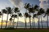 sunrise - Kauai, HI - 10-16-17  01 (Tucapel) Tags: sunrise kauai hawaii clouds palm trees ocean