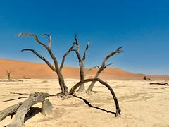 Driving through the Namib Desert (197travelstamps) Tags: namibia africa namib desert travel 197travelstamps adventure dune sossusvlei sesriem naukluft national park dead vlei deadvlei surreal tree