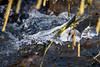 Eiswelten (juergen.treiber) Tags: neandertal winter eisblumen