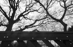 20180228_Outlines (Damien Walmsley) Tags: outlines trees blackandwhite
