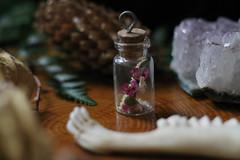 IMG_8323 (sdaponte) Tags: still life taxidermy floral botanical greenery jaw bone vial jar pinecone amethyst