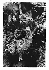 Biotech is Godzilla (SEVEN7H SON) Tags: gelso morar kodak trix 400 yashica fx super 2000 sepultura rage film35mm pellicola
