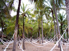 Hamacas (Eva Cocca) Tags: hamacas hammocks playa beach palmeras palms paisaje landscape naturaleza nature repúblicadominicana dominicanrepublic