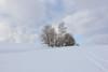 tracks in snow (Xtraphoto) Tags: landscape snow sky bäume tree trees track tracks spuren spur winter