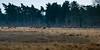 flock red deer (m.limbeek) Tags: wildlife flock parkdehogeveluwe reddeer