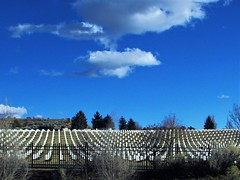 Santa Fe National Cemetery (thomasgorman1) Tags: clouds canon cemetary graveyard tombstones nm trees bluiesky national military