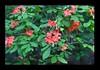 Duke Gardens July 2015 9.07.48 PM (LaPajamas) Tags: nc flora dukegardens gardens