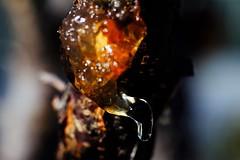 La vida del árbol... (ameliapardo) Tags: arboles vida savia macro macrodelanaturaleza fujixt1sevilla andalucia españa