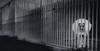 Abandoned (Jean-Luc Peluchon) Tags: lumix fz1000 animal chien dog cage adoption noiretblanc nb bw blackandwhite jail prison tristesse sadness