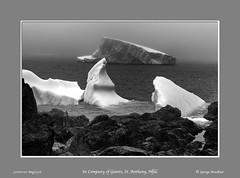 In Company of Giants, St. Anthony, Nfld (George Bruckner) Tags: icebergs ice floatingice stanthony newfoundland newfoundlandslandscapes newfoundlandss bruckner blackandwhite blackandwhitephotography brucknersphotography bw brucknersfineartphotography brucknerslandscapephotography georgebruckner georgebrucknersphotography georgebrucknersfineart georgebrucknerphotography atlanticcoast atlantic pentax645z pentaxart pentaxfineart