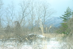 Mt. Kamafuse (Train view) (しまみゅーら) Tags: fujifilm xe2 xf 35mm f14 ebc fujinon astia oneday shimokita hachinohe train trip