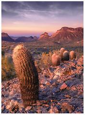 Golden Hour   San Tan Mountains, AZ (zwainhaus) Tags: cactus saguaro golden hour sunrise cliff desert arizona san tan mountains nikon tamron scenery scenic vista hill cloud clouds zalman wainhaus