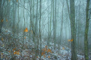 Foggy Forest 23