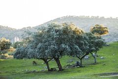 Sierra de Andujar - Spain (wietsej) Tags: sierra de andujar rx10 rx10m4 iv sony landscape nature spain andalusia rx10iv