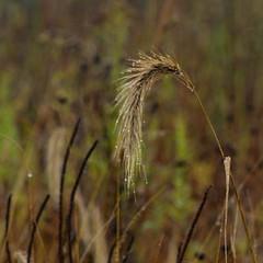 Dixon_JB_444_3945 (Joanne Bouknight) Tags: dixonwaterfowlrefuge illinois mist morning observationtower rain storm thewetlandsinstitute