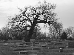 IMG_2893 (kennethkonica) Tags: nature canonpowershot canon usa america midwest indianapolis indiana indy outdoor black7white cemetery tree plant tombstone dead random winter