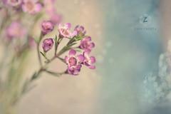 Friday morning (Zara Calista) Tags: friday february bokeh dreamy dream blur soft nikon d750