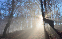 Shining Through (Hector Prada) Tags: bosque niebla luz sol contraluz rayos árbol hayedo forest fog mist light sun backlight beams tree beech paisvasco basquecountry ephemeral magic spiritual mystic mágico efímero nature winter woods morning