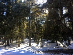 IMG_9774 (anisaheawad) Tags: morocco travel traveling nature digital ifrane