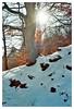 Winter (°/°nur mit Film°/°just Film°/°) Tags: kodak portra400 olympus35sp rangefinder analog film farbfilm farben natur nature 35mm