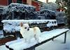 ___ bianco su bianco ___ (erman_53fotoclik) Tags: olivia cane muso bianco panca neve freddo animale mammifero amore gelo chiwawa siepe