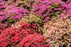 2017. Wellington. (Marisa y Angel) Tags: botanicgarden aotearoa jardínbotánico 2017 wellington nuevazelanda wellingtonbotanicgarden newzealand botanicalgarden botanischergarten jardimbotânico jardinbotanique ortobotanico