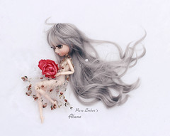 Lost (pure_embers) Tags: pullip cinciallegra cinci doll dolls obitsu uk england laura luts wig silver pure embers pureembers junplanning japan girl grey beautiful beauty elegance elegant hair pullipcinciallegra photography snow rose marinasdollhouse windy groove