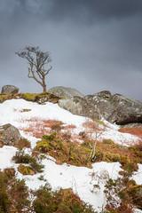 Dartmoor Winter (Rich Walker75) Tags: dartmoor devon landscape landscapes landscapephotography tree trees tor winter snow england greatbritain canon eos100d efs1585mmisusm eos