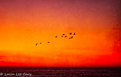 In Flight At Sunset (lorinleecary) Tags: birds california cambria centralcoastcalifornia ocean sunsets waves artography composite digitalart horizons inflight red sunset textured