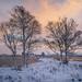 Loch Ba Trees