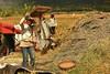 IMG_0457 (Kalina1966) Tags: bali island indonesia people rice field