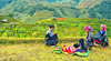 An Ordinary Hmong Life in Mu Cang Cha (@Jarmila) Tags: ordinary hmong life mu cang chai ©jarmila village travel nature people portrait street reportage vietnamese girl yen bai province vietnam terraced rice field rolling hills outdoors hill tribe woman basket canon5d3 country mùcangchải asia indocina risaie lifestyle colorful ethnic minority ritratto baby journalism documentary