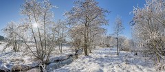 *Winterpanorama an der Alf* (Albert Wirtz @ Landscape and Nature Photography) Tags: panoramic panorama winter wintermagic mehren alf alftal bachlauf bach stream creek river oberlaufderalf quellgebietderalf eifel vulkaneifel eifelsteig albertwirtz bestofwinter natur nature natura landscape paesaggi paysages raureif hoarfrost sun sonne snow sky bluesky blauerhimmel tree erlen erlengrund germany deutschland rheinlandpfalz rhinelandpalatinate steineberg naturschutzgebiet flusaue auenlandschaft nikon d810