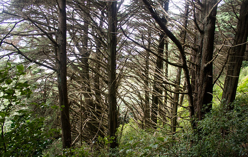 Woods - Wellington, NZ
