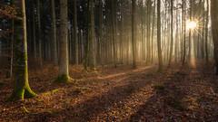 Magic forest path (Sebo23) Tags: light lightbeam licht lichtstimmung lichtschatten gegenlicht backlight sunbeams sunstar sonne sonnenstrahlen wald forest nature natur naturaufnahme landscape landschaft canon6d canon16354l