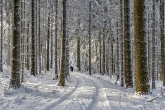 *The winter walk* (albert.wirtz) Tags: albertwirtz hoheacht eifelsteig wandern walking hiking schneewandern snow tree fichten tannen forest wood winterforest natur nature natura jammelshofen hocheifel eifel rheinlandpfalz rhinelandpalatinate deutschland germany europa winter forstweg unpavedroad waldweg schneewanderung bestofwinter winterwonderland winterzauber wintermagic landscape paesaggi paysages landschaft nikon d810 skipiste loipe aussichtsturm hochacht fichtenwald tannenwald wanderlust thewanderlust