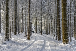 *The winter walk*