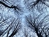 Trees in blue (yanitzatorres) Tags: ramas tronco forestal forest sky abstrac abstracto spain españa larioja nature naturaleza black negro azul blue cielo contraluz árboles trees