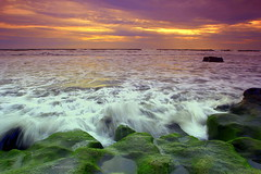 the moss and the wave (wisnadi) Tags: sun sunset horizontal landscapes rock wave light cloud water travel blacksand beach coast sea ocean