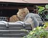 "Onomichi-035 (photozaki) Tags: ""dogs cats"" dog dogs inu cat cats neko shikoku japan ohenro88 ohenro pilgrimage"